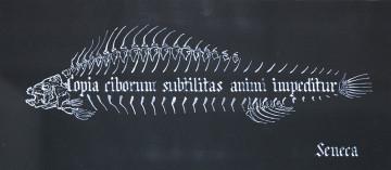COPIA CIBORUM SUBTILITAS ANIMI IMPEDITUR