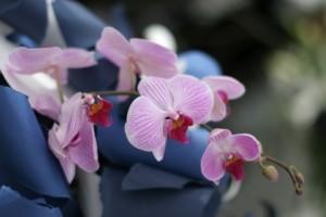 日本式美丽