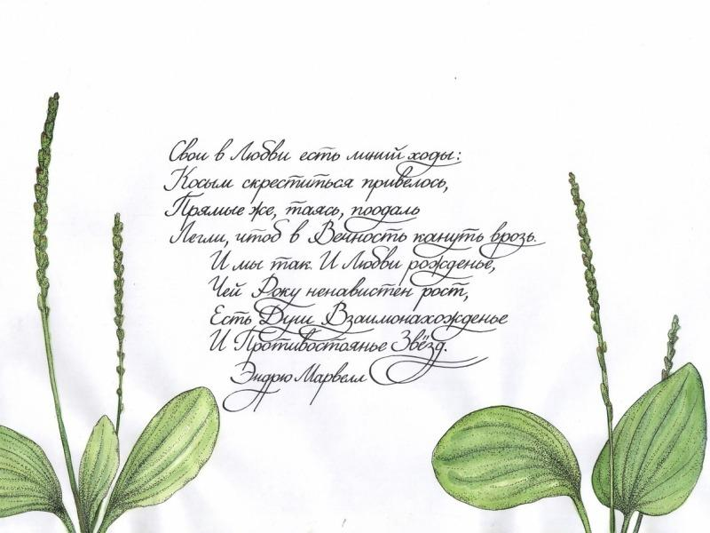 В Туле открылась выставка каллиграфии