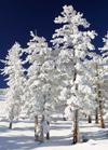 Каллиграфия на снегу - видеоуроки